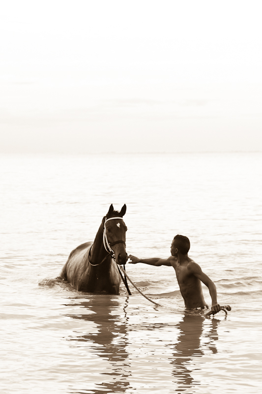 moi du toi photography, Pet photographer South Africa, pet photography horses