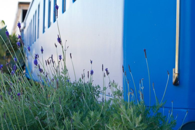 Lavender and train carriage
