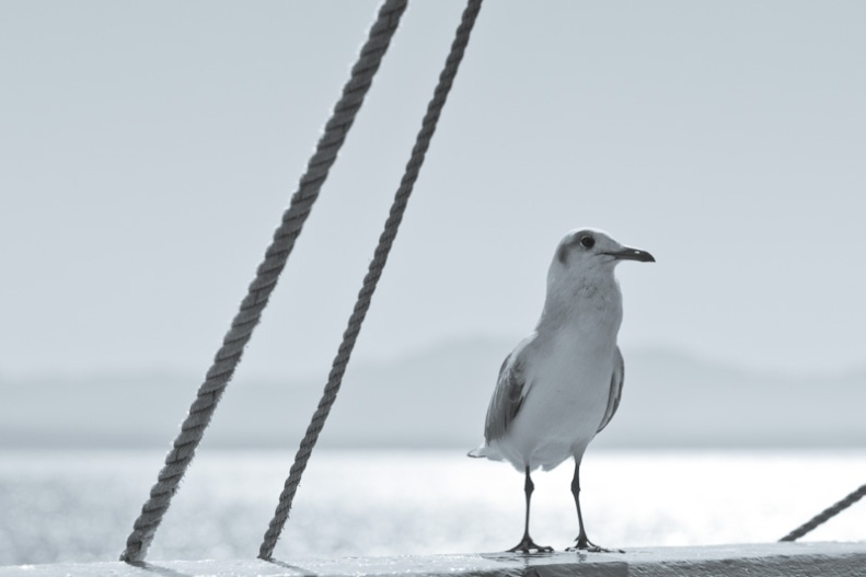 Seagull sitting on harbour wall