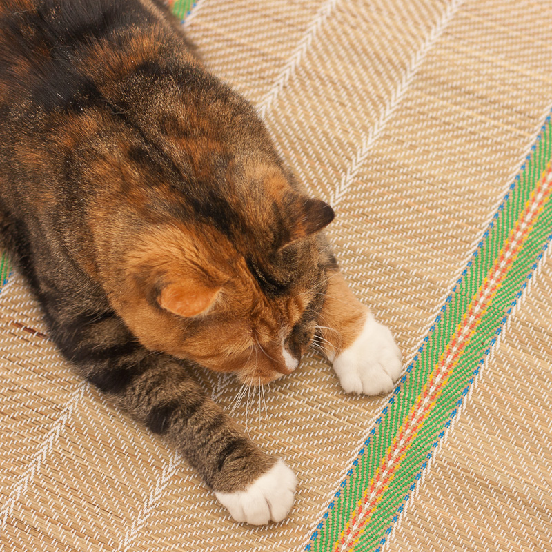 Calico cat, white paws, cat on a mat