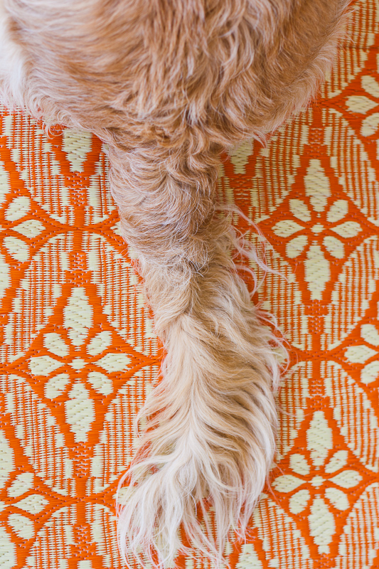 Golden Retriever tail on orange beach mat