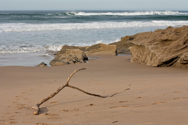 Washed up branch on the beach