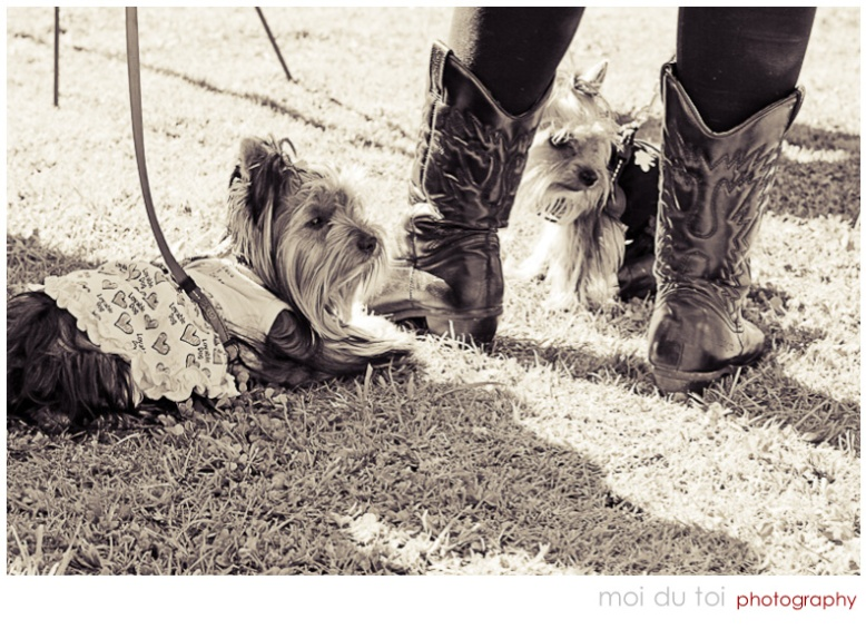 dogs & girl with boots
