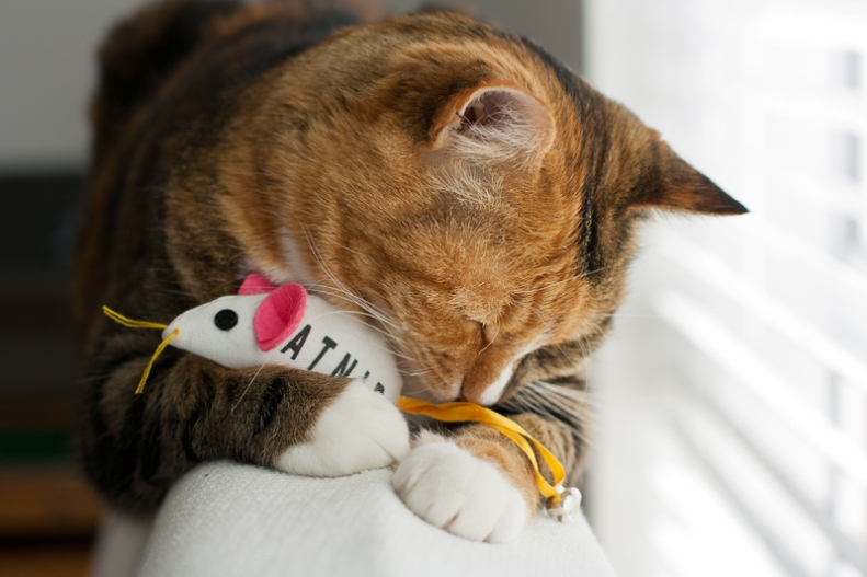 Calico cat and toy mouse