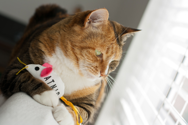 Calico cat and catnip mouse
