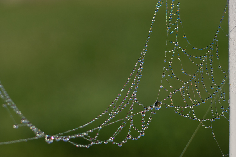 Christmas baubles, spider web with dew