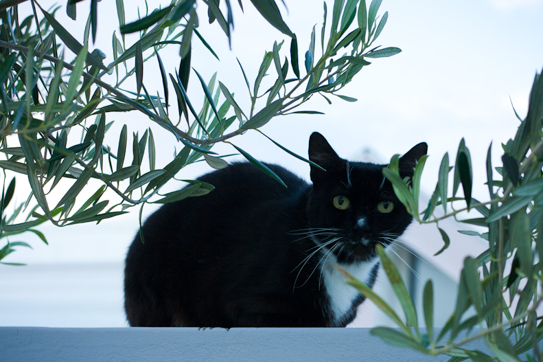 Tuxedo cat sitting on wall