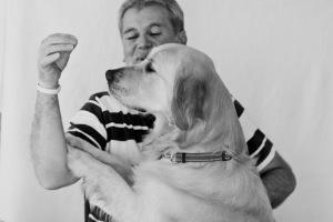 pet photography golden retriever service dog