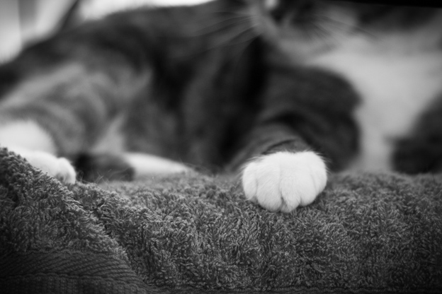 Pet photography, cats, cats paw