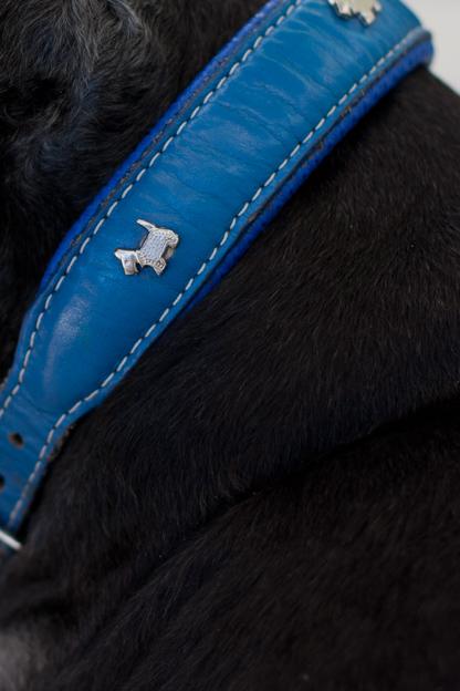 Dog Collar, pet photography