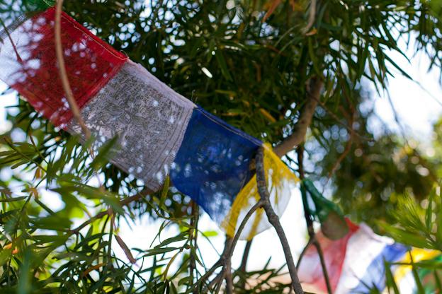 Tibetan Buddhist prayer flags in a tree