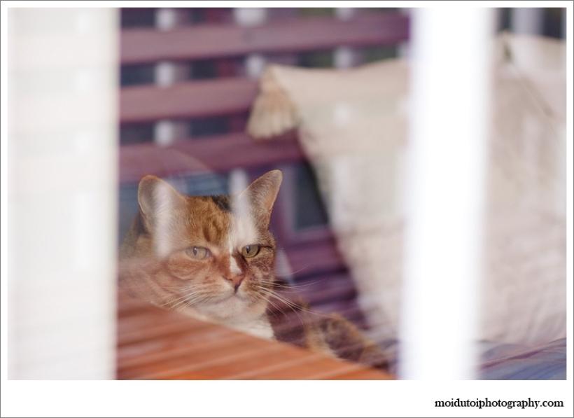 Pet photography, cat photography, natural light pet photography, moi du toi pet photography