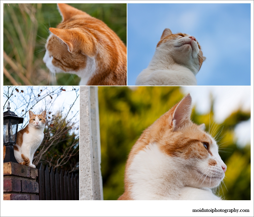 Pet photographer South Africa