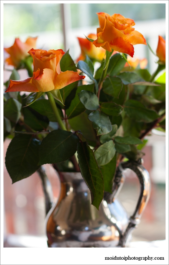 Natural light photography roses