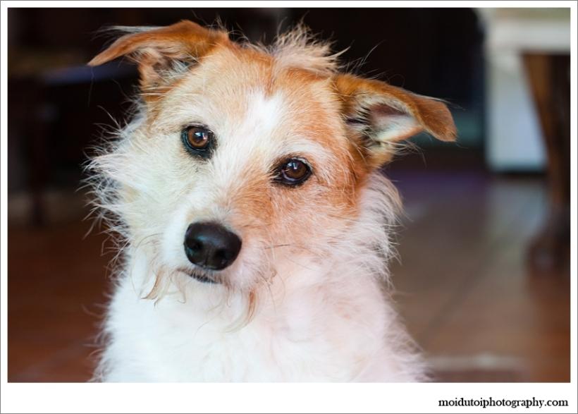 Pet photography Sarah, terrier