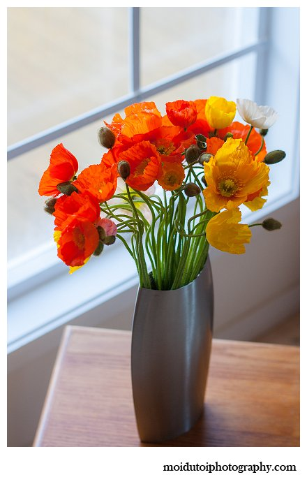 Poppies, window light