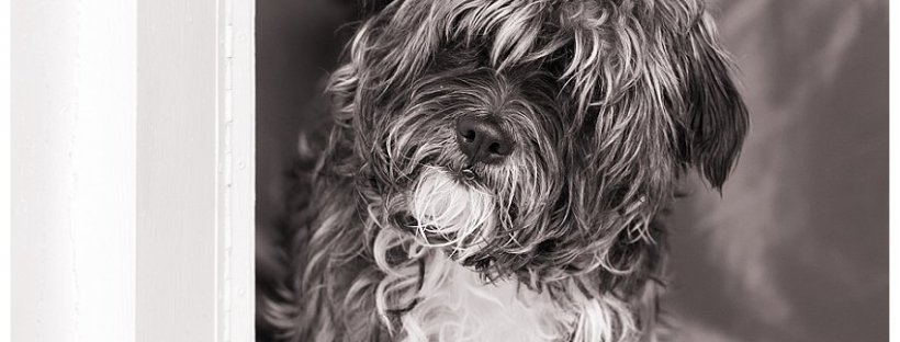 Cute Scruffy dog poses for photographs in Leisure Island, Knysna
