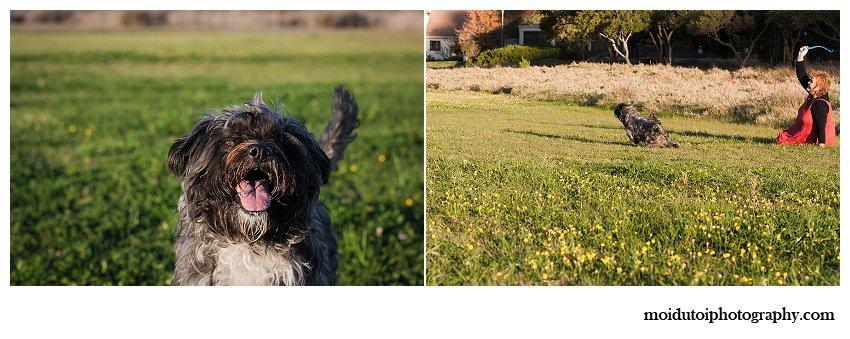 Cute Scruffy dog poses for photographs in Knysna