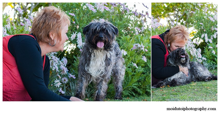 Cute Scruffy dog poses for photographs in Knysna