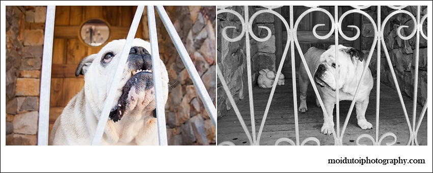 Bulldog Blog-5223
