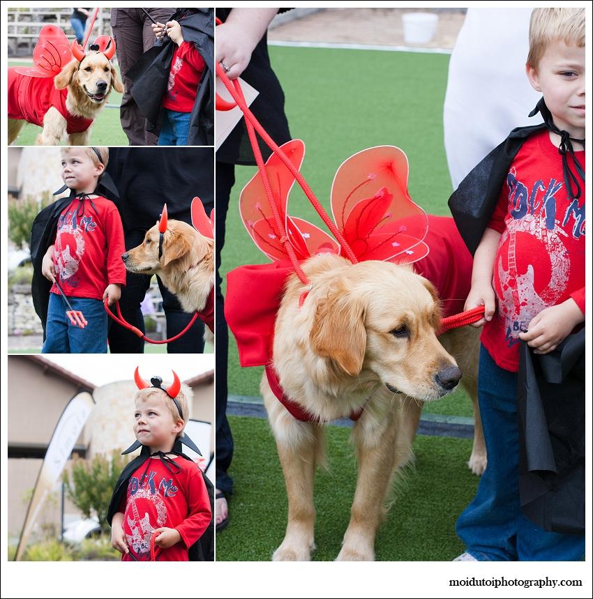Dog show golden retriever, fancy dress dog show