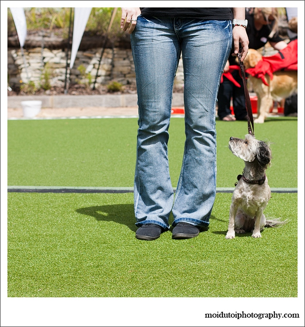 Winner of the obedience category