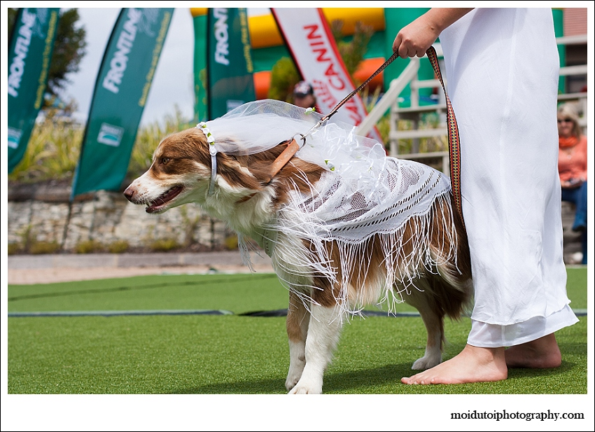 Fancy dress dog show