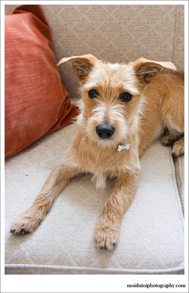 Pixel Terrier mix-5761