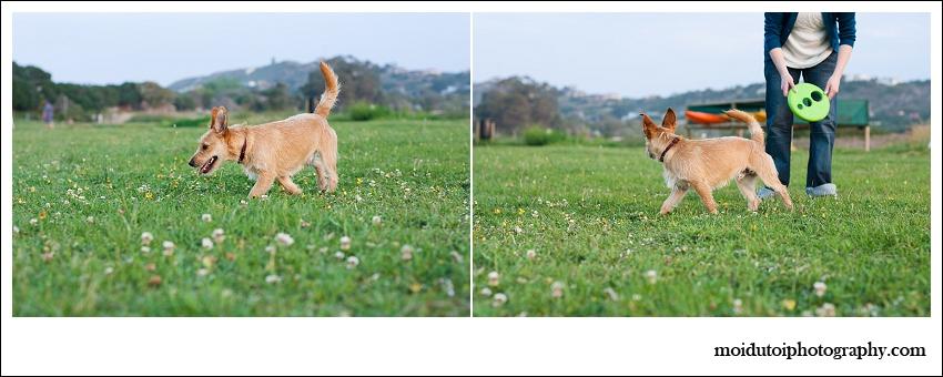 Pixel Terrier mix-6153