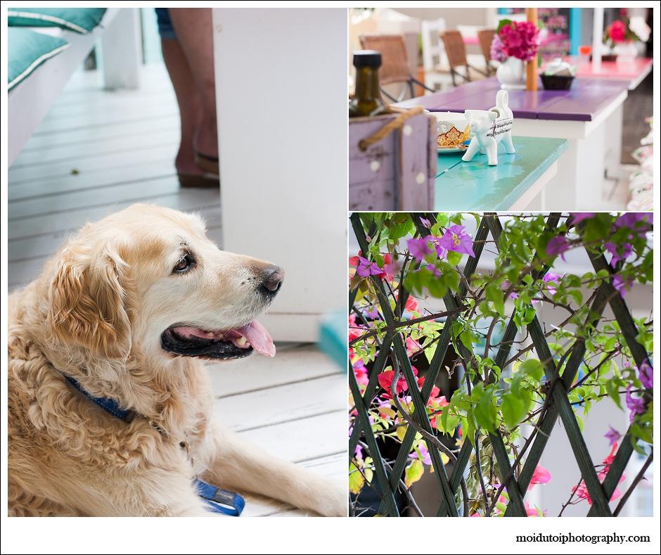 Jeans Bakery Knysna, Golden Retriever, pet photography