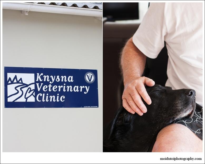 knysna veterinary hospital, black labrador, Dr Lamprecht