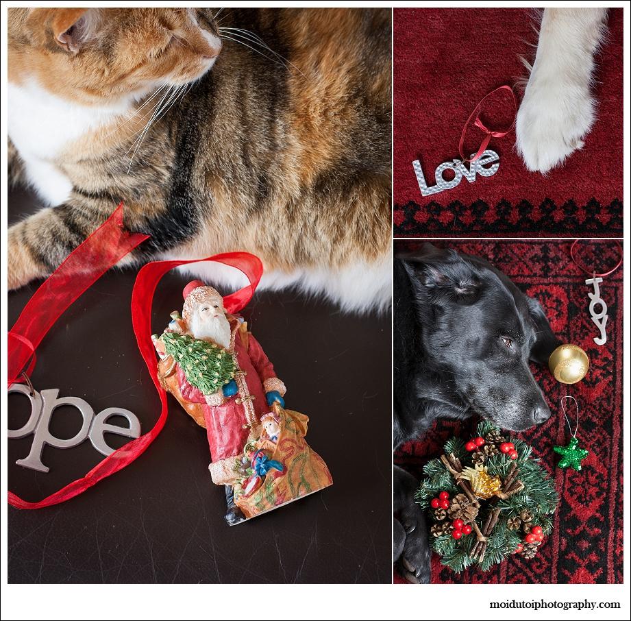 Christmas pets, moi du toi photography