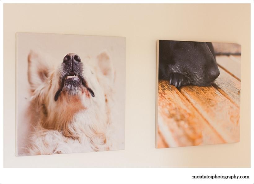 moi du toi photography, products, canvas prints