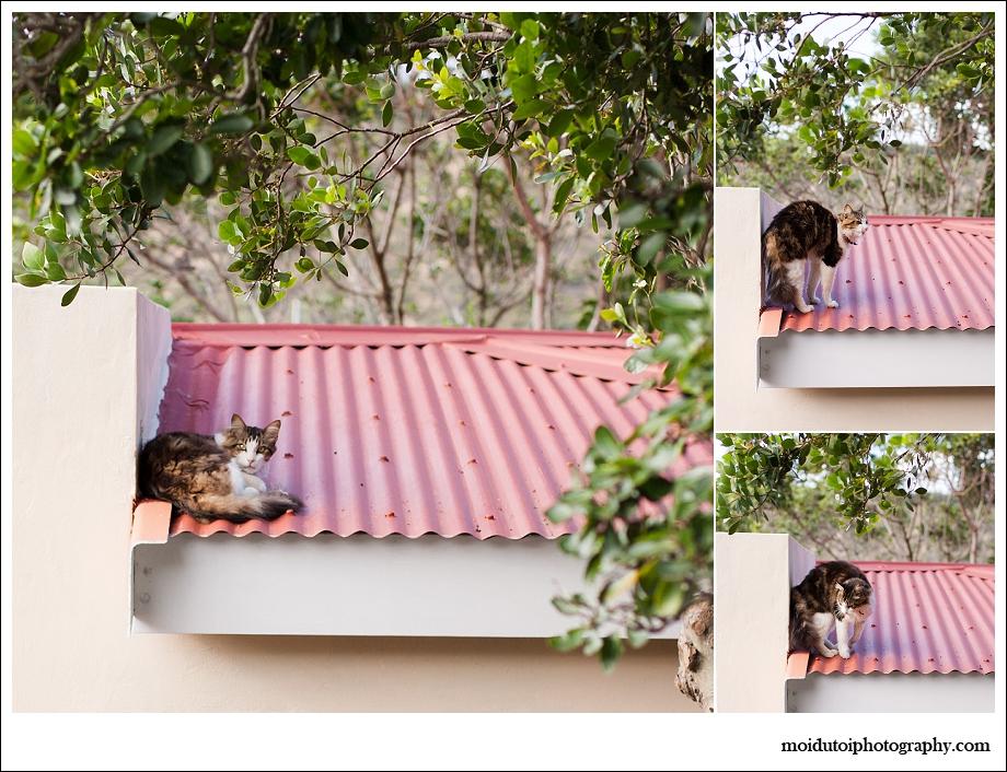 Cat, lexie, cat photography, stylecat