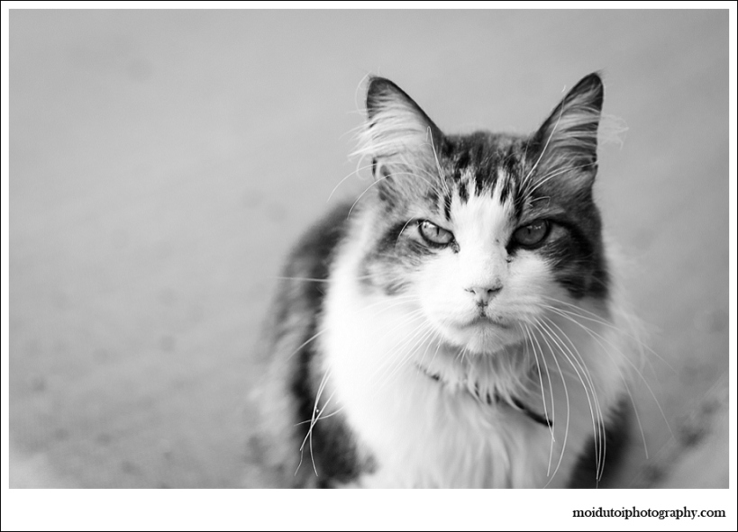 Cat, lexie, cat photography, stylecat