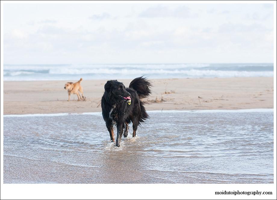 Dogs, beach, western Cape, pet photography