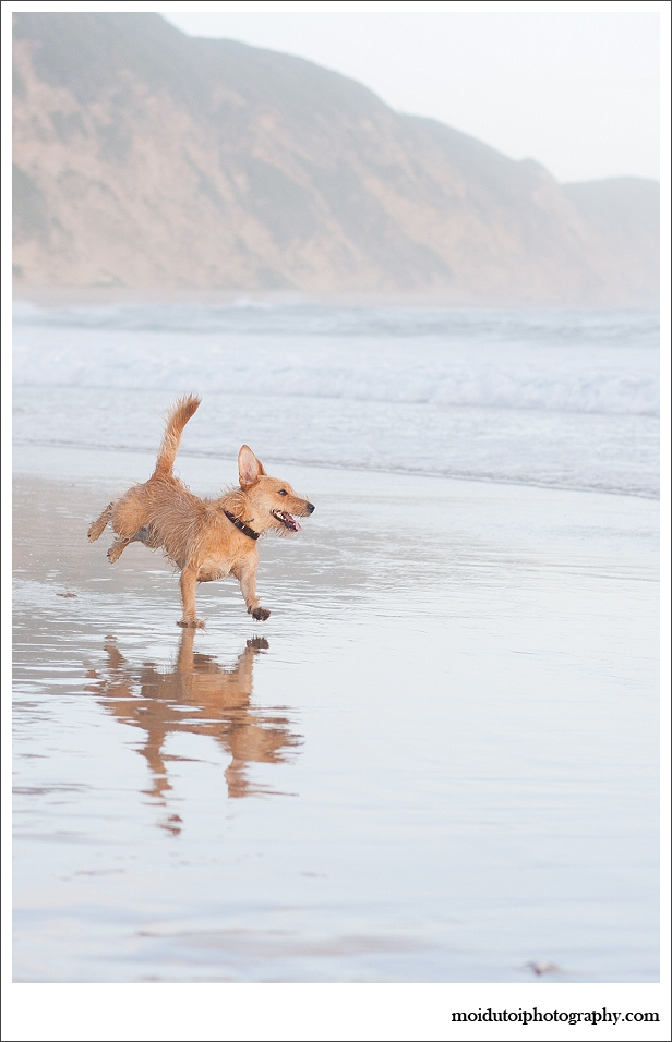 Dogs, beach, western Cape, pet photography