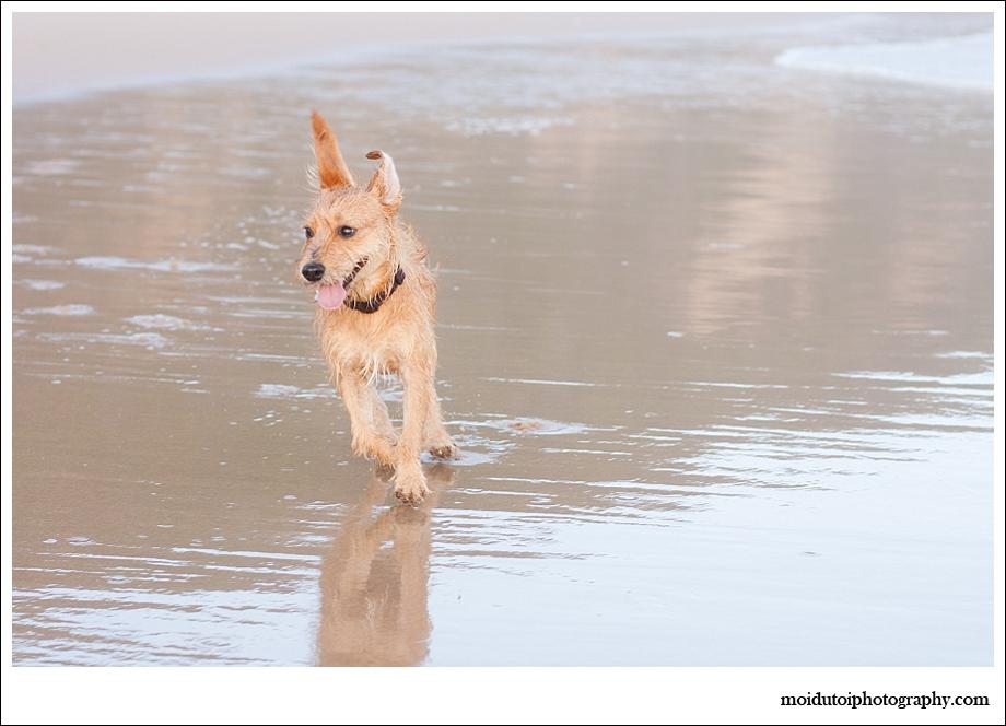 Beach dogs-8707