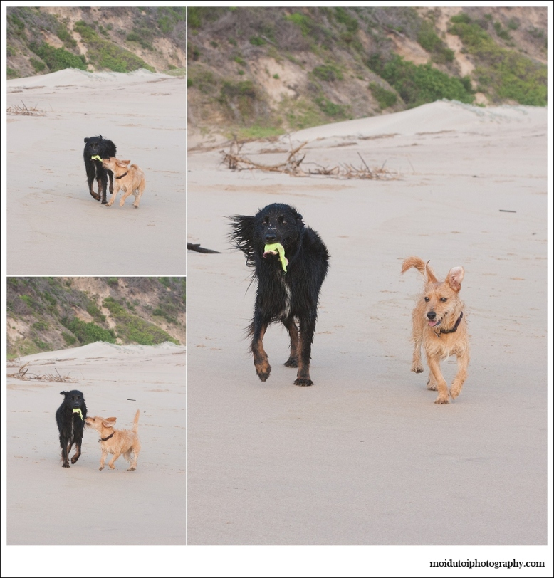 Dogs, beach, western Cape, pet photography, beach buddies