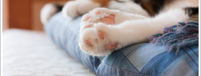 Cat Photography, pet photographer south africa, cat feet
