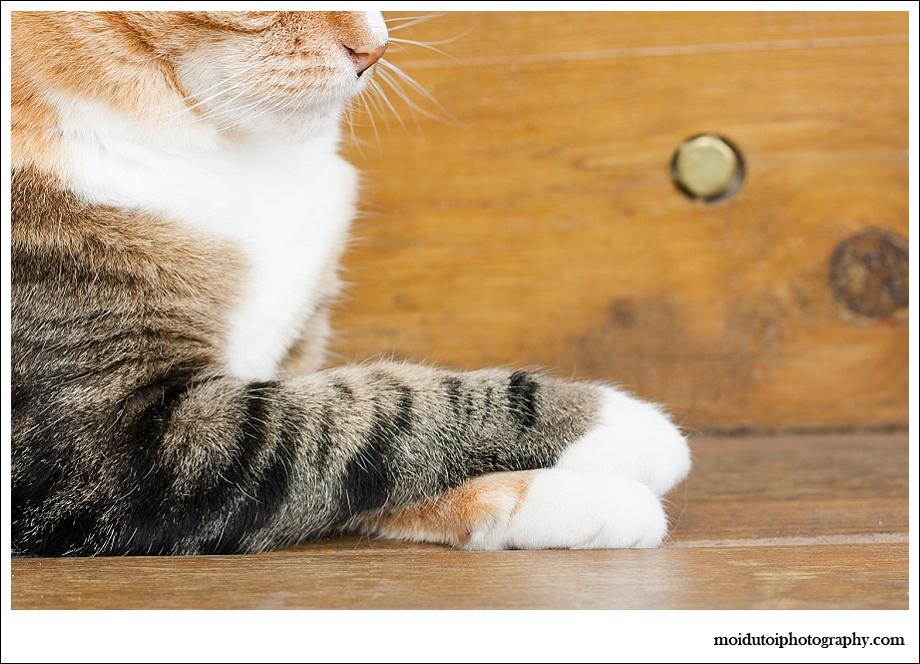 Cat Photography, pet photographer south africa, cat feet