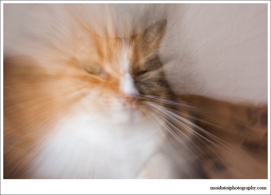 Abstract cat, pet photography