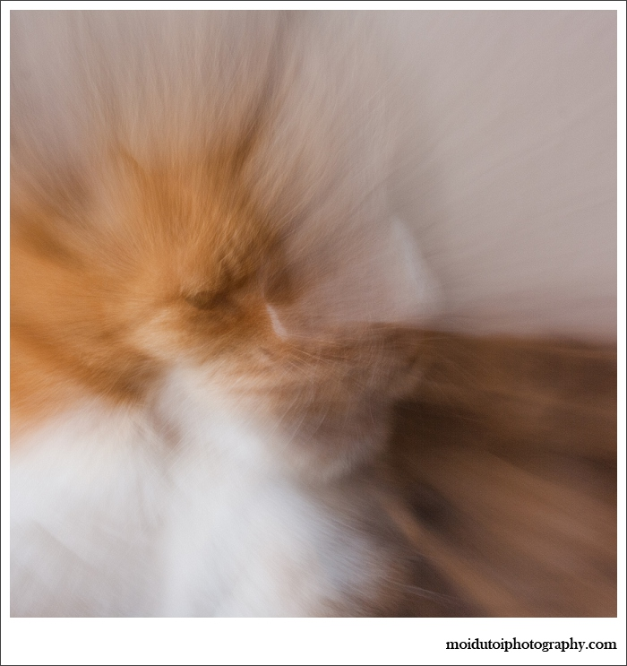 cats, abstract photography