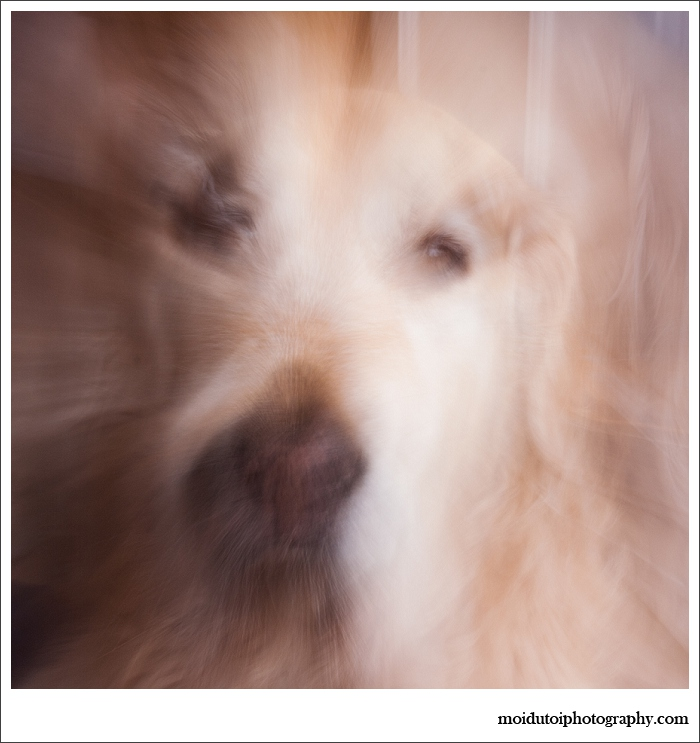 Abstract pet photography, dogs