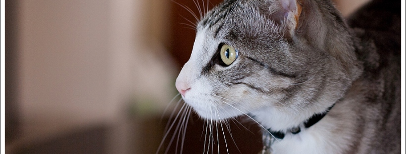 animal photography, cat, feral cat
