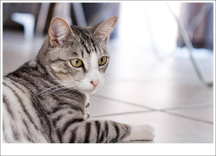 Feral cat, animal photography, South Africa, Pet portrait, cat portrait
