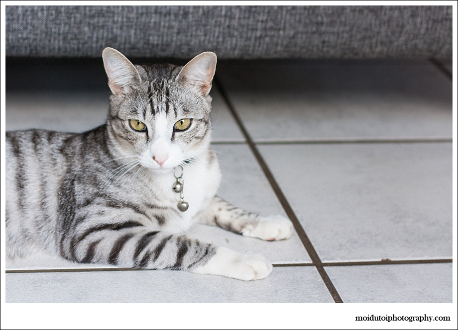 Feral cat, animal photography, South Africa