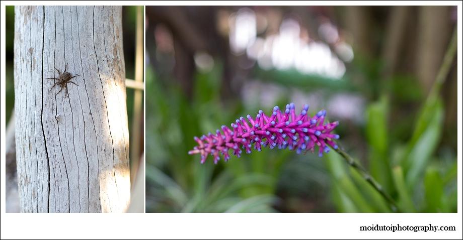 spider, flower