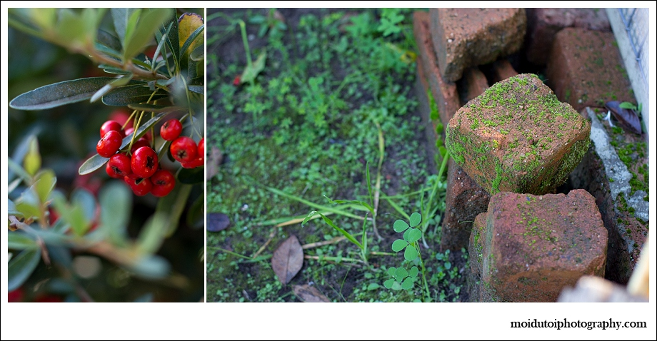 garden life, hard mountain pear, moss on bricks