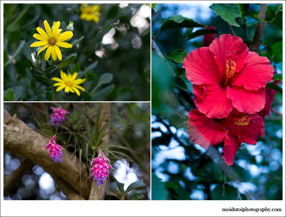 Tick Berry, Hibiscus, flowers